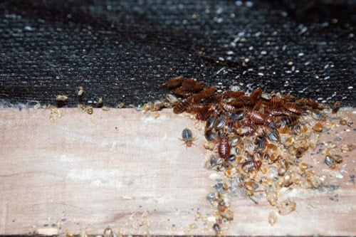 how to make bed bug bites go away